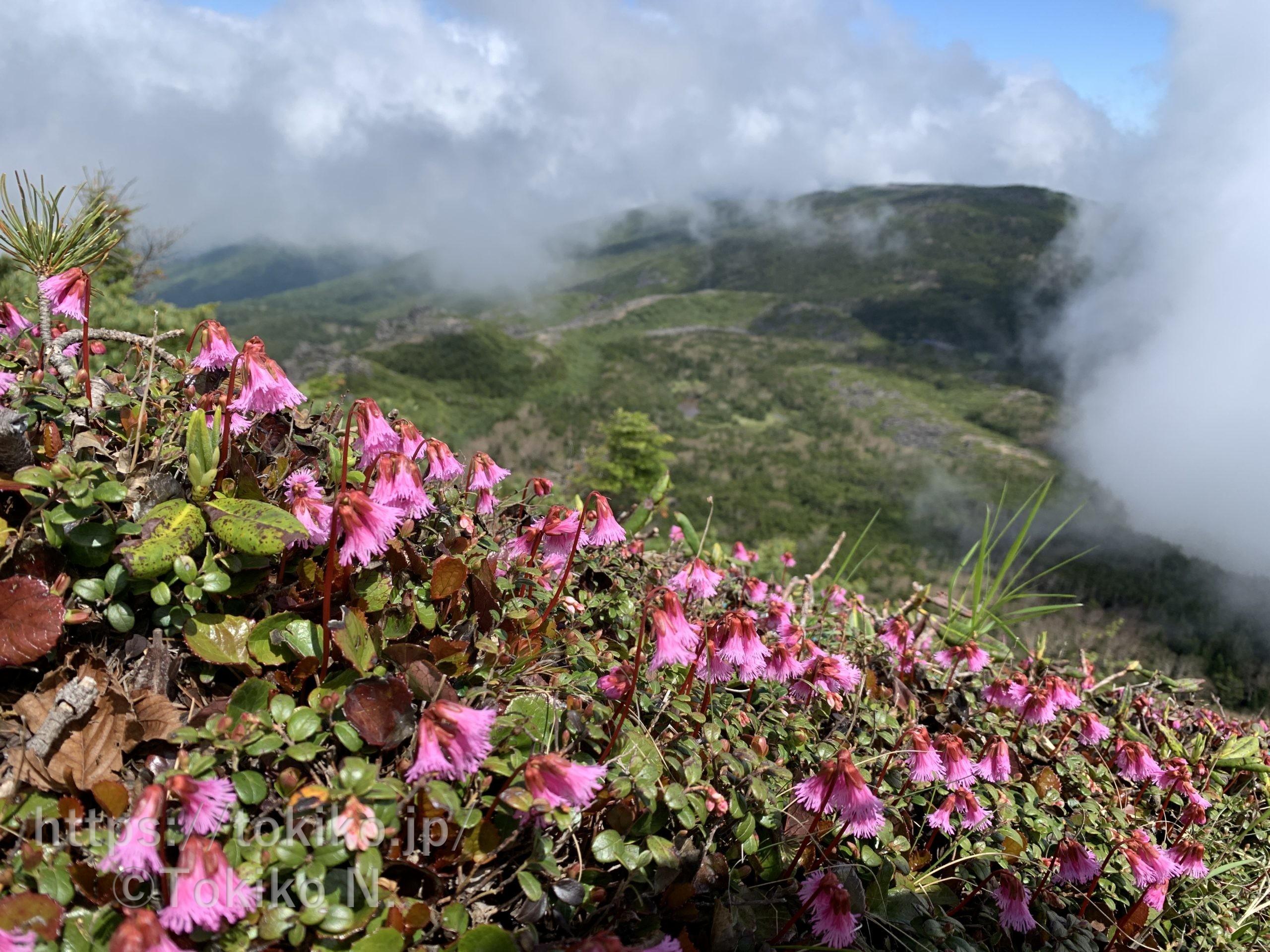 八ヶ岳(にゅう・天狗岳・中山)|白駒池から周回|マタニティ登山その①|妊娠5ヶ月
